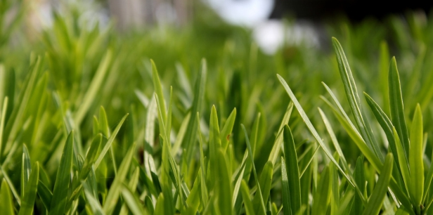 close up photo of green leafed plants